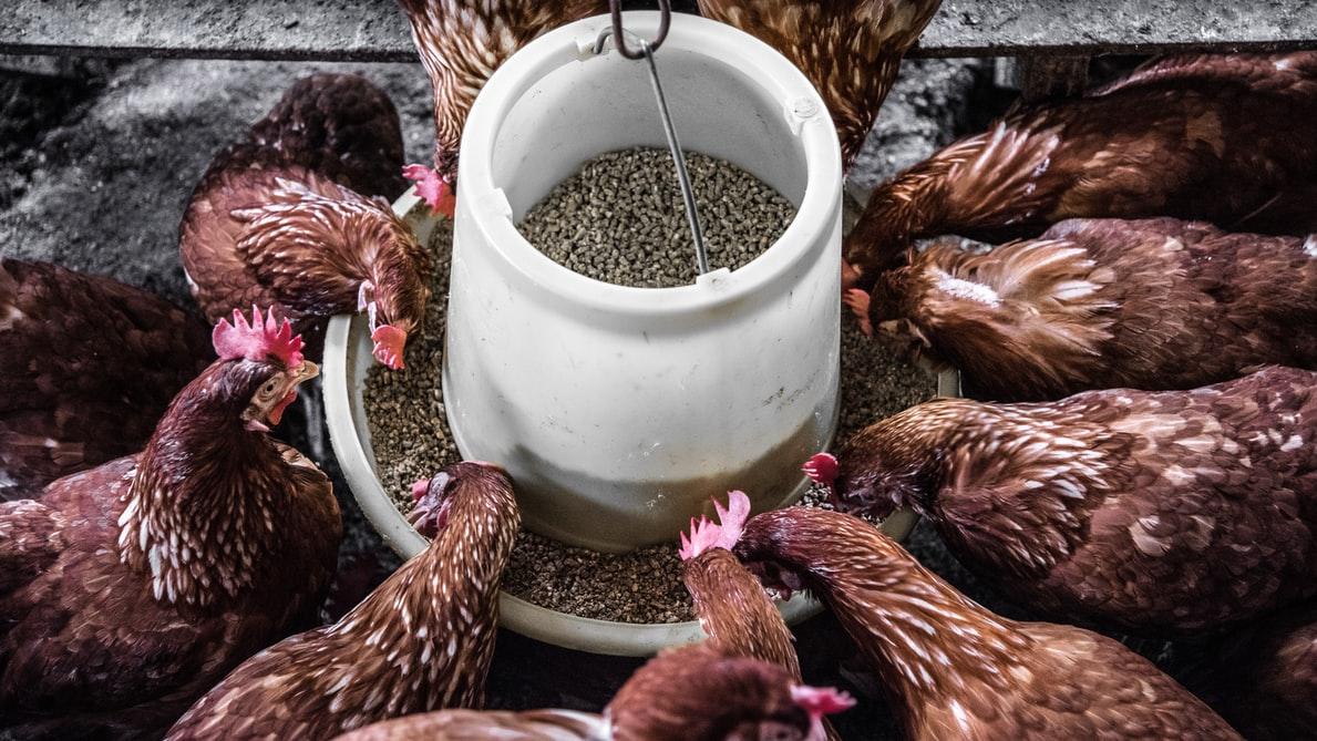 Pārtikas un lauksaimniecības organizācija aicina uz vebināru