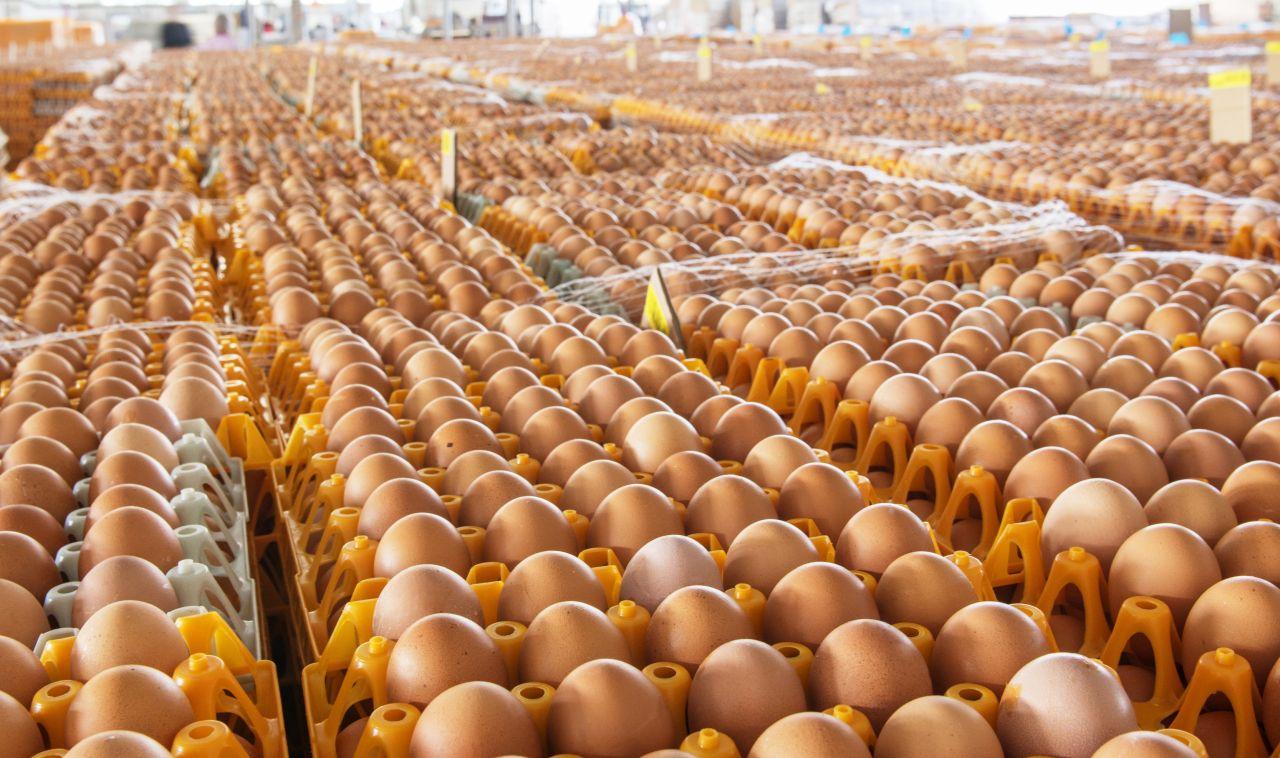 Balticovo 2020.gadā saražojis 649 miljonus vistu olu