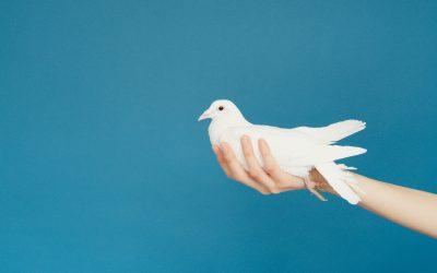 Ieraksts: Vebinārs putnkopjiem par AMR un biodrošību